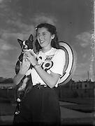 Dog Show - 8th Annual Bray Championship.16/08/1952