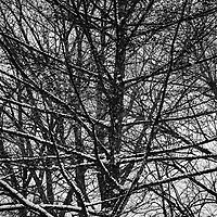 Winter Branches Layers - Montreal, Quebec, Canada