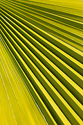 Palm leaf pattern, Tohono Chul Park, Tucson, Arizona