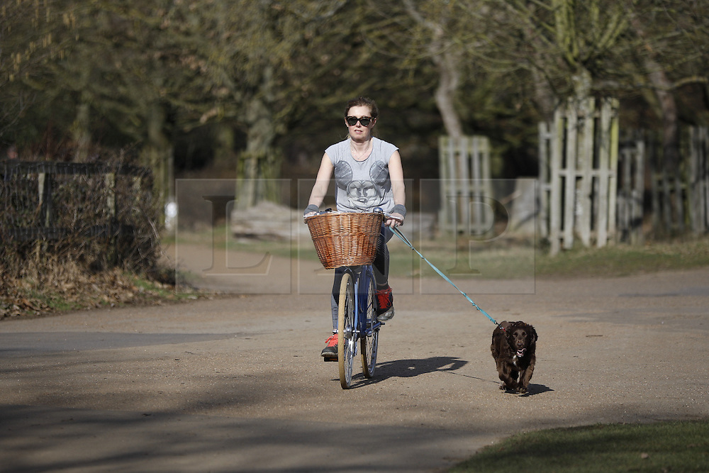 © Licensed to London News Pictures. 20/02/2017. London, UK. A woman cycles with her dog through Richmond Park. A short spell of warm weather is being experienced in parts of the UK today. Photo credit: Peter Macdiarmid/LNP