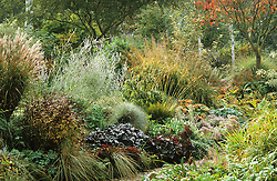 Mixed autumnal border with strong foliage interest from perovskia, miscanthus, heuchera and molinia.