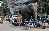 Elephant Runs Riot