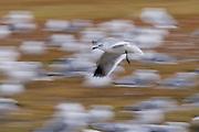 Seagull Motion Art.<br /> -Savannah, Georgia U.S.A