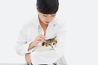 Female veterinarian holding cat against gray background