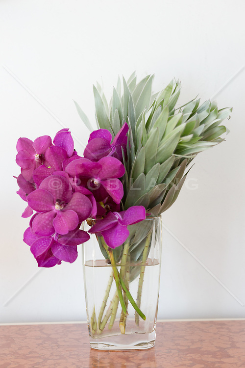 orchid in a glass vase