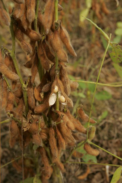 July 28, 2005. Soy plantations near Belterra, Mato Grosso State, Brazil. ©Daniel Beltra