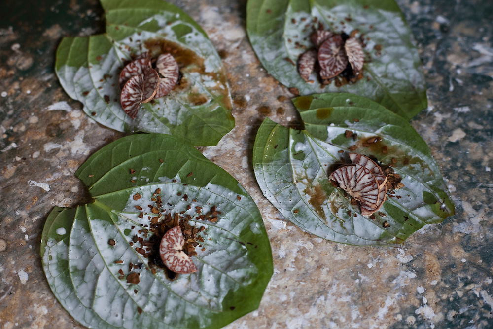 The making of Paan, a Betel leaf with arca nut that is chewed by a lot of Burmenese,  near Maungmagan village, Dawei, Burma.<br /> Note: Images are not distributed or sold in Portugal