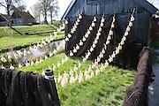 Fish drying, Zuiderzee museum, Enkhuizen, Netherlands