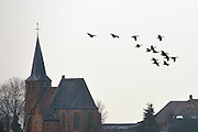 Nederland, Ubbergen, 28-2-2013Wilde grauwe ganzen in de Ooijpolder.Foto: Flip Franssen/Hollandse Hoogte