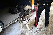 Man with husky in bus station