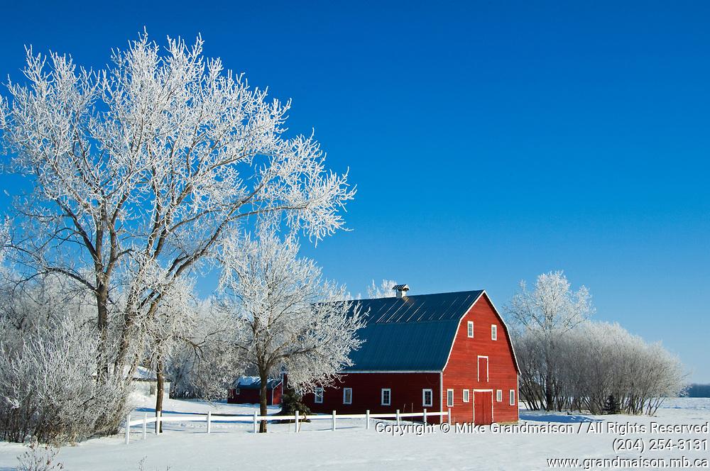 Hoarfrost and red barn<br />Grande Pointe<br />Manitoba<br />Canada