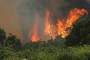 Israel, Haifa Carmel Mountain Forest, blazing flames at a wildfire