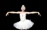 Les Ballets Trockadero de Monte Carlo <br /> at the Peacock Theatre, London, Great Britain <br /> press photocall <br /> 16th September 2015 <br /> <br /> <br /> Programme 1<br /> press night 16th September 2015 <br /> <br /> <br /> <br /> Dying Swan <br /> <br /> Joshua Thake as Eugenia Repelskii <br /> <br /> <br /> <br /> Photograph by Elliott Franks <br /> Image licensed to Elliott Franks Photography Services