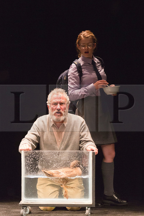 "© Licensed to London News Pictures. 24/10/2014. London, England. Richard Piper as Ekdal, Sara West as Hedvig and Deirdre the Duck. Belvoir Theatre from Sydney, Australia, present ""The Wild Duck"" by Simon Stone and Chris Ryan after Henrik Ibsen from 23 October - 1 November 2014 at the Barbican Theatre, London. The play is part of the International Ibsen Season and is directed by Simon Stone. Photo credit: Bettina Strenske/LNP"