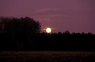 DEU, Germany, Lower Rhine region, forest and moon near Wesel.....DEU, Deutschland, Niederrhein, Wald und Mond bei Wesel...