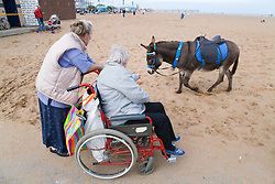 Wheelchair user with Multiple, Sclerosis and her carer looking at a donkey on the beach whilst on a day trip to Skegness organised by Nottingham Disabled Friendship Club,