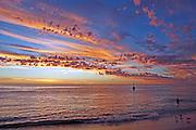 Seagulls sunset Cottesloe