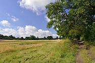Footpath alongside arable crop field of ripening wheat, Berkshire, Uk