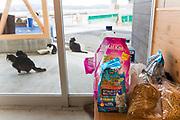 I hamnen p&aring; &ouml;n Tashirojima i Japan bor n&aring;gra katter. Bes&ouml;kare l&auml;mnar kattmat i en v&auml;ntkur. Maten distrubueras senare ut till katterna.<br />  <br /> Tashirojima kallas f&ouml;r &quot;katt&ouml;n&quot; eftersom h&auml;r lever hundratals katter tillsammans med ca 50 personer.   <br /> <br /> Ishinomaki, Miyagi Prefecture, Japan. <br /> <br /> Fotograf: Christina Sj&ouml;gren<br /> Copyright 2018, All Rights Reserved