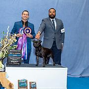 Staffordshire Bull Terrier Club of America 02/21/20
