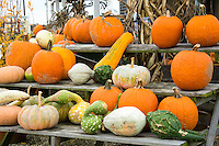 Pumpkins and gourds for sale at a roadside stand on the Eastern shore of Virginia, USA.
