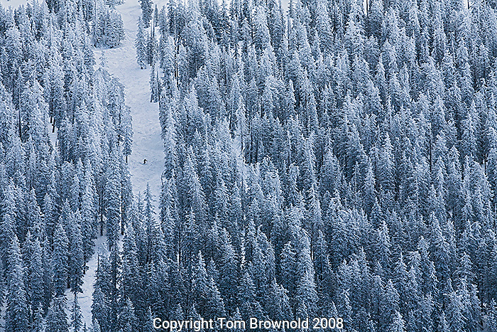 Solitary skier on a narrow run through the forest on the San Francisco Peaks in Northern Arizona.