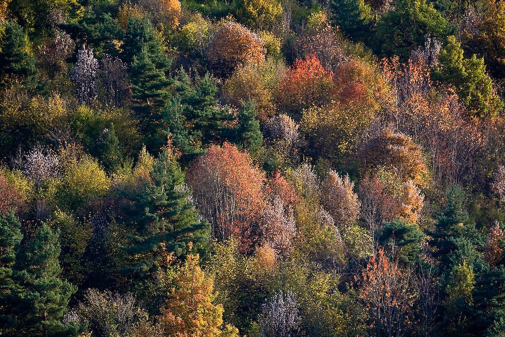 Trees with autumn colours.