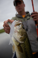 LARGEMOUTH BASS CAUGHT ON A TEXAS FARM POND