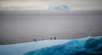 Often people associate Antarctica with Blues and Whites and not a lot else. But light is an amazing thing, and when a slight fog enters the mix the way we perceive colours can change. Thats what i like about this image, the slight hint of pastel tones across the image. <br /> Oh, the six playful penguins on top of the floating iceberg are rather important as well!