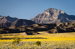 Death Valley National Park Visitors come not only to experience the record heat but also the beauty. Despite the desert conditions, the park is known for its spring wildflowers. Under perfect conditions, the park experiences a rare event known as a wildflower &quot;super bloom&quot; which produces a sea wildflowers. Most of the desert wildflowers are annuals. This ensures their survival as this allows them to lie dormant as seeds during times of drought. Here, a field of Desert Gold, also known as Hairy Desert Sunflower, explodes into a sea of yellow during the super bloom of 2016 in Death Valley National Park. In the background is Corkscrew Peak.<br /> <br /> Death Valley National Park, located in eastern California near the border with Nevada is one of the hottest spots on earth, holding the hottest recorded air temperature of 134 &deg;F. The Park also is location of the lowest spot in North America, 282 feet below sea level at the vast salt flats at Badwater Basin. At 3.4 million acres, the park is the largest national park in the contiguous United States. Death Valley National Park sits between the Panamint Range on the west  and Amargosa Range on the east.