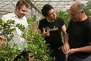 France. Hyeres area,. Hugues Pouget and Sylvain Blanc owner of Hugo and Victor visit green house were they produce differents citrus fruits