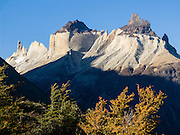In late summer, a forest of Southern Beech (Lenga or Nothofagus) turns gold under Los Cuernos (the Horns) in Torres del Paine National Park, Chile. The foot of South America is known as Patagonia, a name derived from coastal giants, Patagão or Patagoni, who were reported by Magellan's 1520s voyage circumnavigating the world and were actually Tehuelche native people who averaged 25 cm (or 10 inches) taller than the Spaniards.