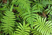 Fern leaves in tropical jungle