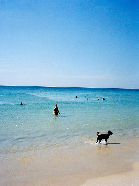 Swimmers and Thai beach dog enjoy the sea on Karon Beach