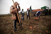 A woman straightens her hair while her work colleagues gather carrots by hand at a collective farm field near the village of Rudakov on Oct. 24, 2009.