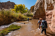 Cross the Fremont River to finish Spring Canyon trail in Capitol Reef NP, Torrey, Utah, USA. In Capitol Reef National Park, we hiked impressive sandstone gorges from Chimney Rock Trailhead over to Spring Canyon and down to a car shuttle at Highway 24 (10 miles one way with 1100 ft descent and 370 ft gain), Torrey, Utah, USA.