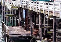 United States, California, Santa Cruz. The Santa Cruz Wharf with sea lions under the wharf.