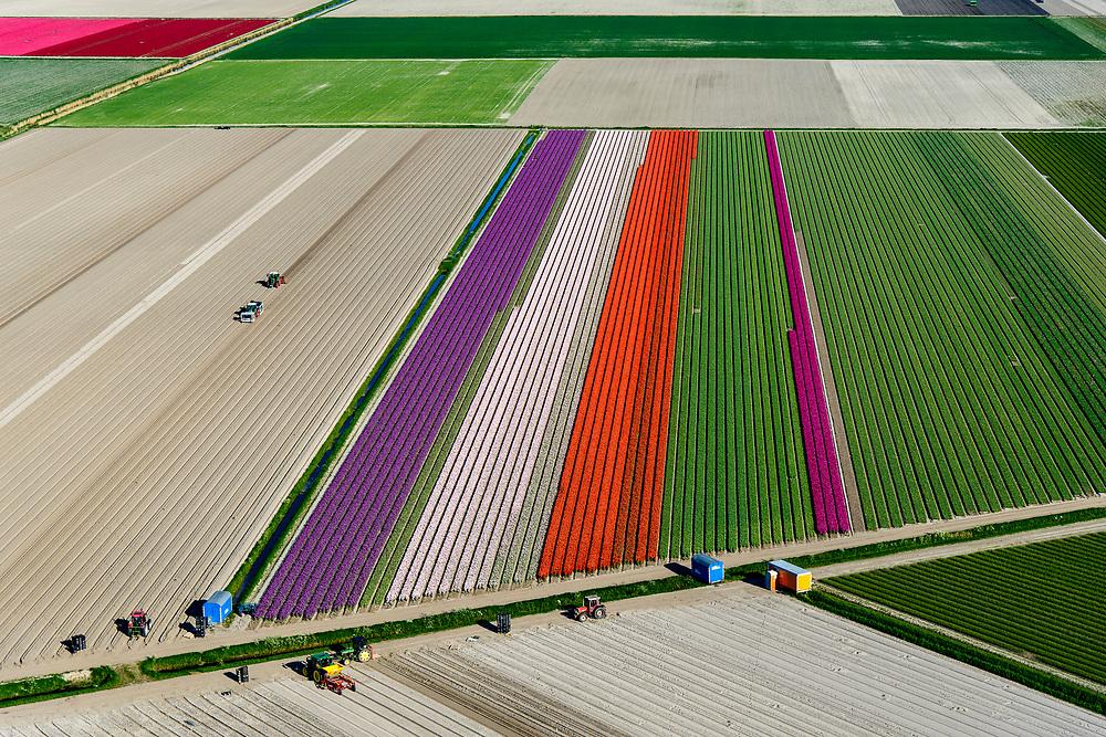 Nederland, Noord-Holland, Hollands Kroon, 07-05-2018; tulpenvelden in de Wieringermeer, ten zuiden van Amstelmeer. Na het rooien van de bollen blijft de zandgrond leeg achter.<br /> Mondriaan in the polder, flower bulb fields in the Wieringermeer polder.<br /> <br /> luchtfoto (toeslag op standaard tarieven);<br /> aerial photo (additional fee required);<br /> copyright foto/photo Siebe Swart