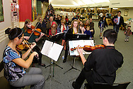 Centerville High School Orchestra members perform holiday music at the WashingtonCenterville Public Library in Centerville, Monday, December 5, 2011. In its tenth year, the music could be heard throughout the library.