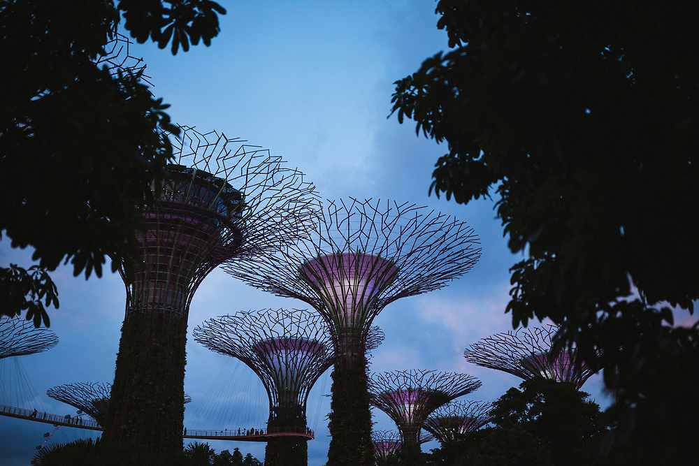 The futuristic Supertree Grove at Gardens by the Bay in Singapore.