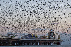 February 5, 2018 - Brighton, East Sussex, United Kingdom - Brighton, UK. Starlings murmuring at Sunset over the Brighton's Palace Pier. (Credit Image: © Hugo Michiels/London News Pictures via ZUMA Wire)