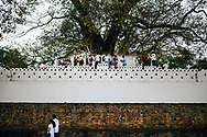People gather at a small shrine near a tree to pray in downtown Kandy, Kandy, Sri Lanka, Asia