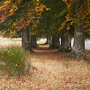 Oak trees with autumn colors