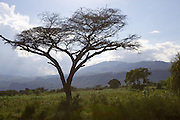 A tree with mountains behind