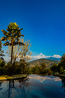 Peaks of the Annapurna Massif of the Himalayas reflected in the swimming pool at Tiger Mountain Pokhara Lodge, Lekhnath (near Pokhara), Nepal.