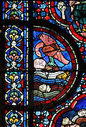 The raven sent by Noah to discover land in receding flood waters, eating dead victims of the flood, from the Life of Noah stained glass window, 13th century, in the nave of Chartres cathedral, Eure-et-Loir, France. Chartres cathedral was built 1194-1250 and is a fine example of Gothic architecture. Most of its windows date from 1205-40 although a few earlier 12th century examples are also intact. It was declared a UNESCO World Heritage Site in 1979. Picture by Manuel Cohen