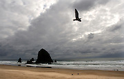 A seagull plays past as Haystack Rock is sillouetted off Canon Beach in Oregon.