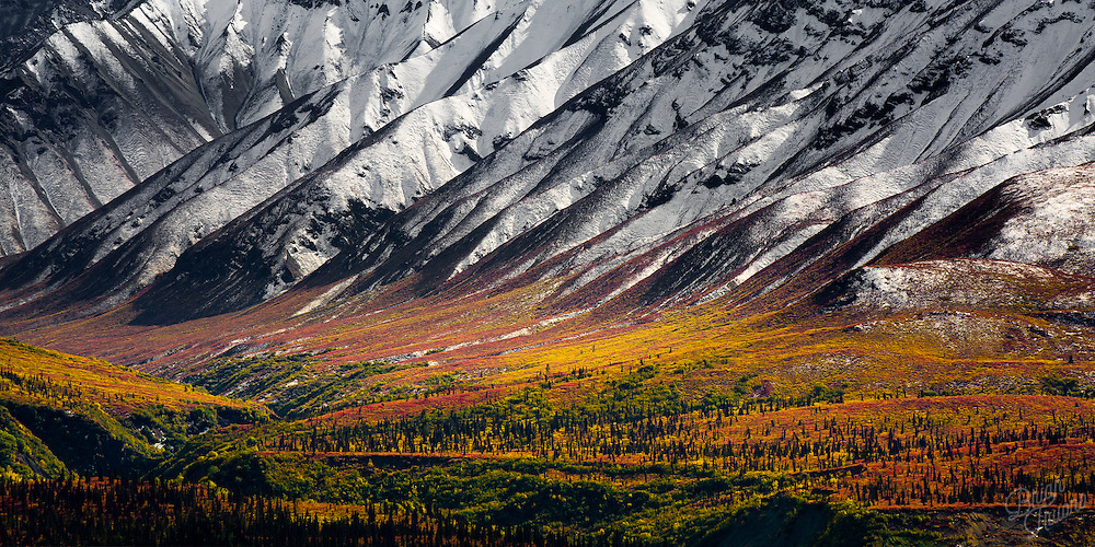 A wonderful juxtaposition of autumn colors and  snowy monochromatic contrasts in the Chugach mountains of Alaska.