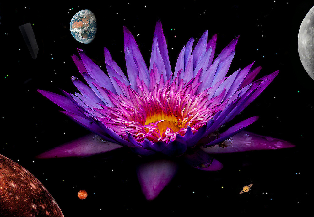 The appearance of a flower is a thing of beauty no matter where in the universe you are, no matter what form of life you are. It is an expression of creation. A product billions of years in the making expelled for waters teaming with life.