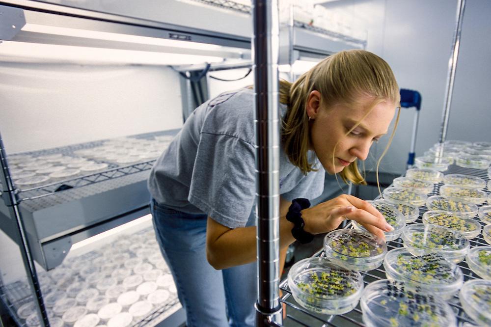 Kansas, USA - Juliane Essig with gene gun and GMO tissue cultures